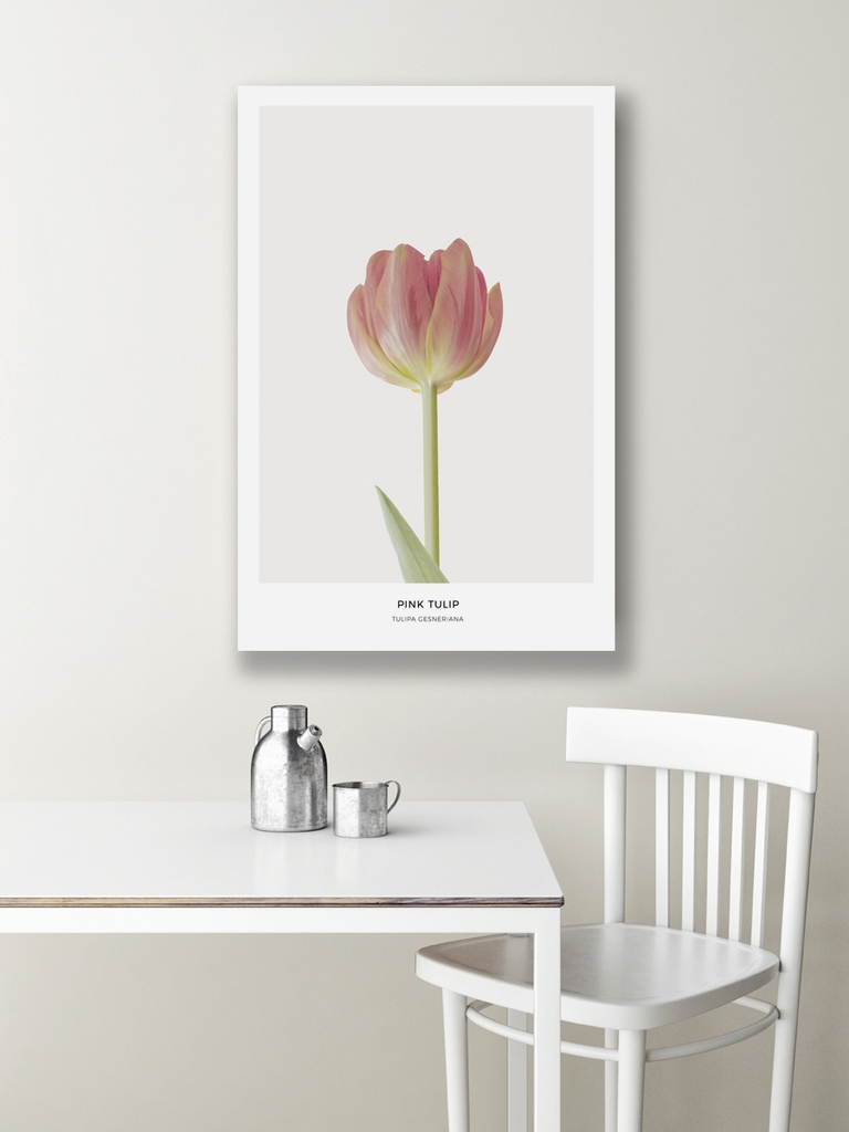 Tranh canvas Pink Tulip Flower