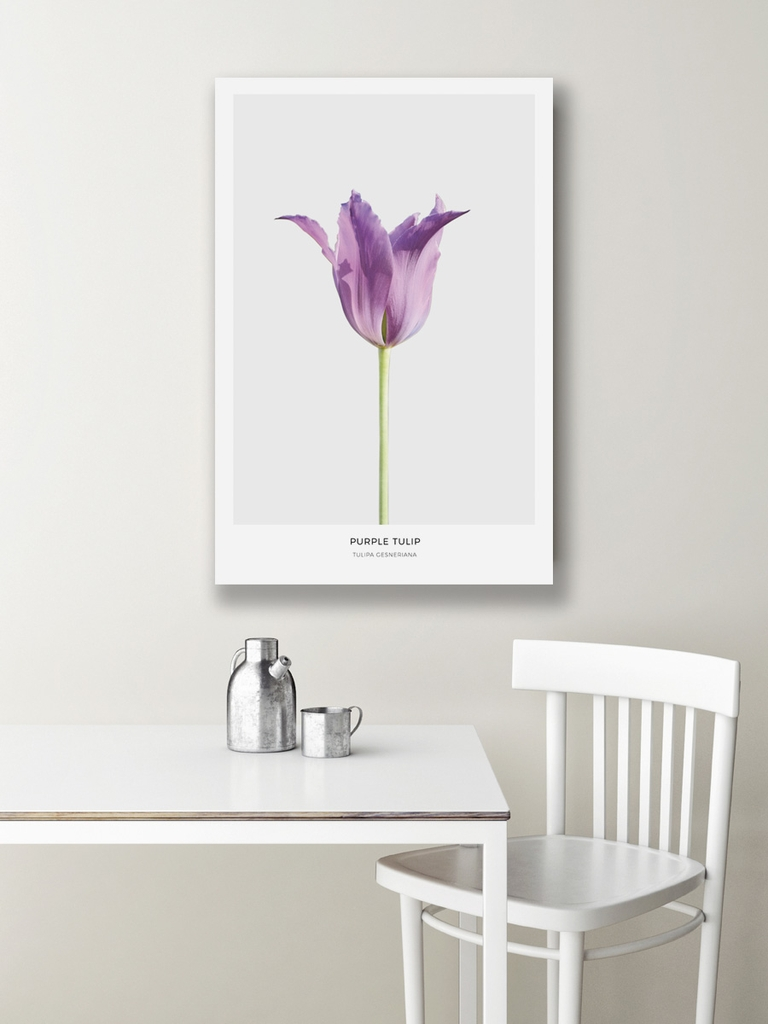 Tranh canvas Purple Tulip Flower