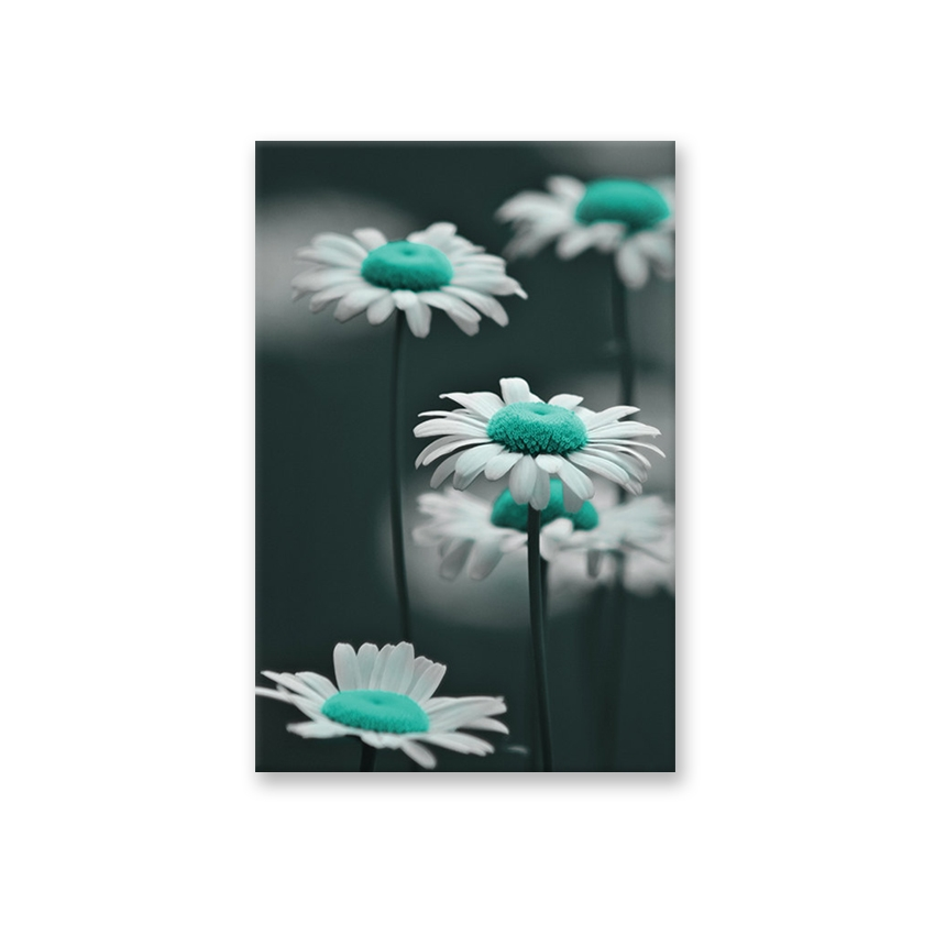Tranh Flower, BW, turquoise, beauty