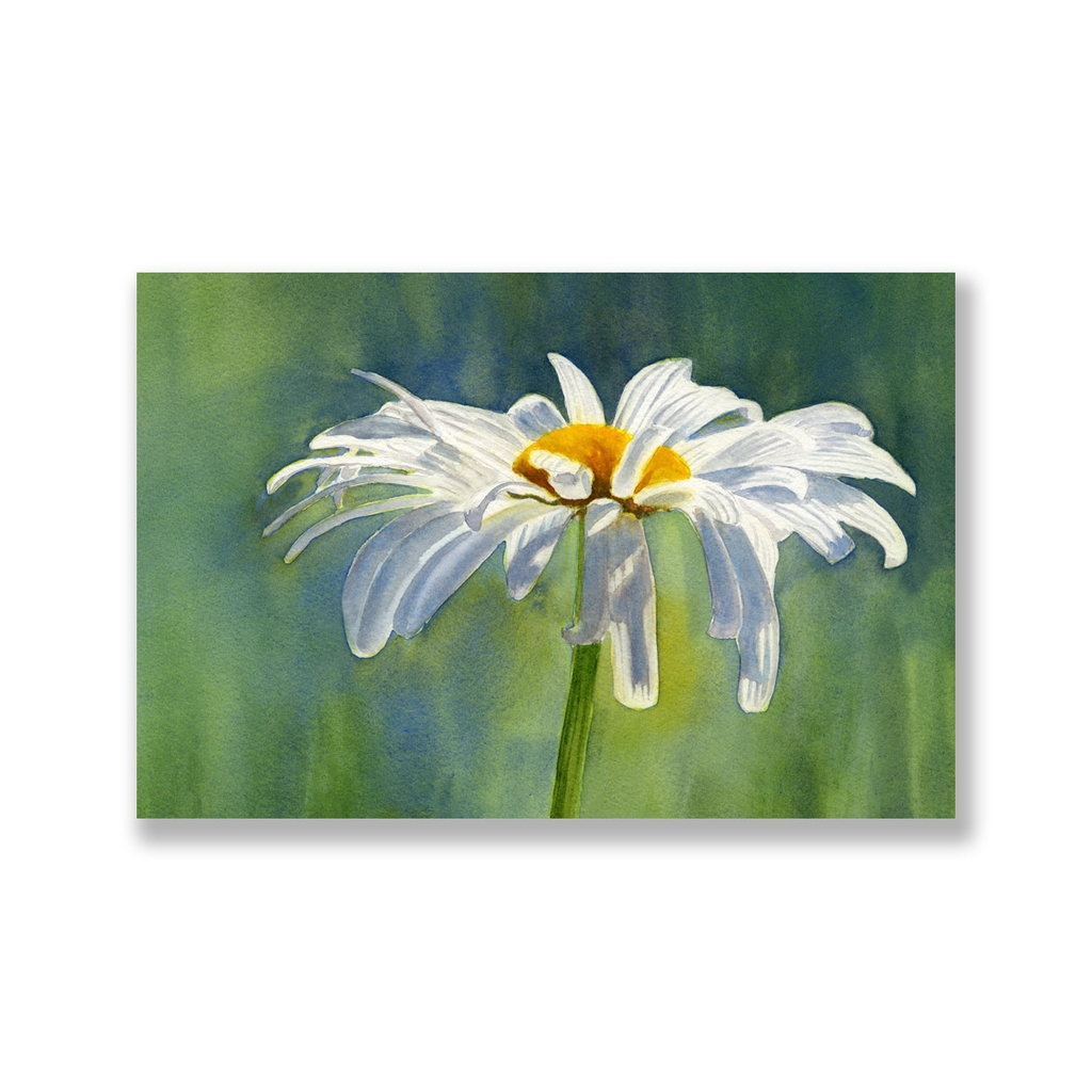 Tranh White daisy flower painting S0220