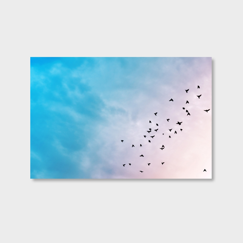 Tranh Birds fly, blue sky