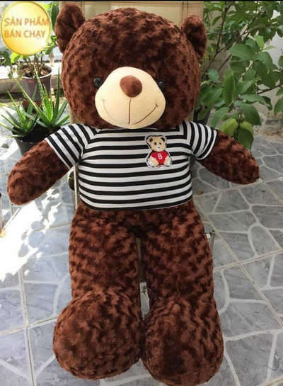GB7 Gấu Teddy