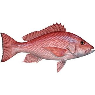 Frozen whole round Red Snapper