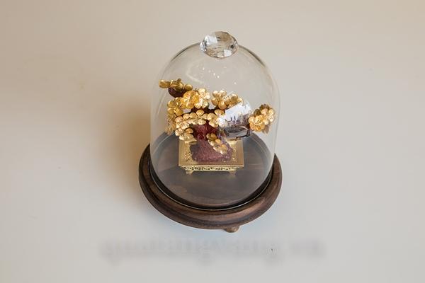 cây mai vàng - quà tặng cao cấp