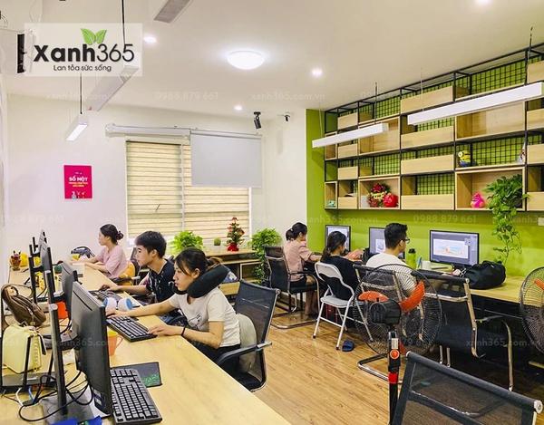 Cây xanh trong văn phòng làm giảm tác hại từ máy tính