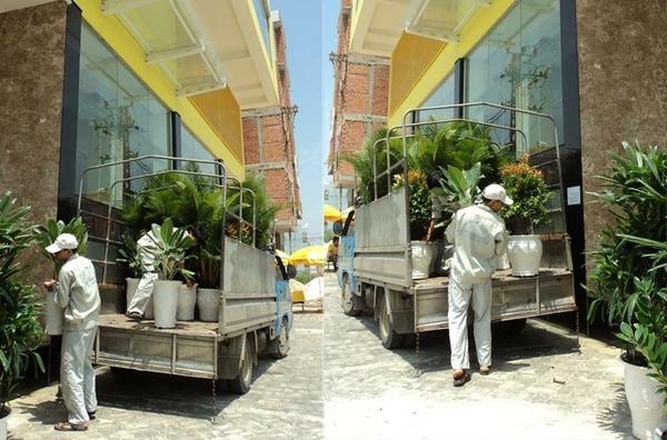 Ảnh thực tế: Nhân viên Xanh 365 vận chuyển cây cho khách hàng