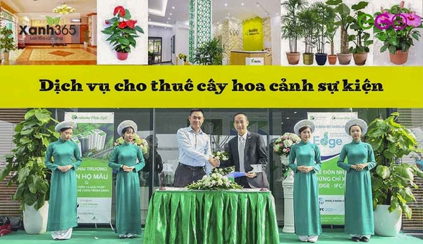 Dịch vụ cho thuê cây hoa cảnh sự kiện của Xanh 365