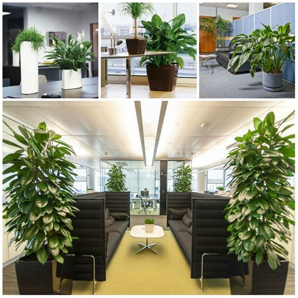 Xanh 365 Garden - đơn vị chuyên cung cấp cây cảnh để văn phòng