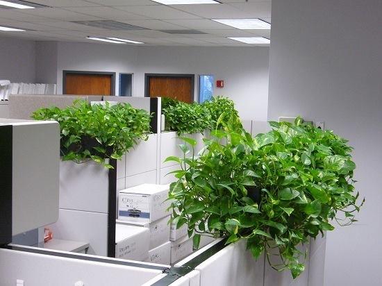 Cây xanh giúp tăng sức sống, sinh khí cho văn phòng
