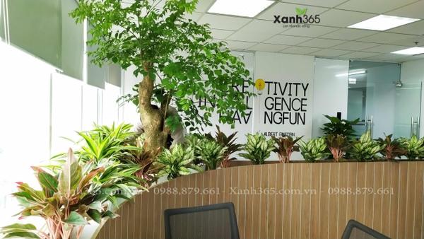 Xanh 365 cho thuê cây tại Công ty CP Công nghệ và Truyền thông SAMO - The Bank