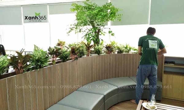 Ảnh thực tế: Nhân viên Xanh 365 chăm sóc cây cảnh cho thuê
