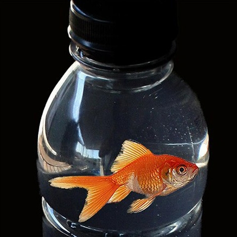 Fish in a bottle
