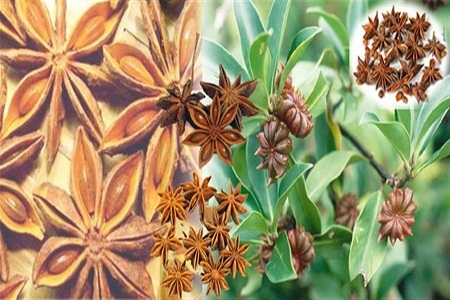 Beauty Benefits - Star Anise