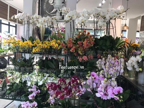 Màu sắc hoa đa dạng luôn là một điều cuốn hút khách hàng tại shop