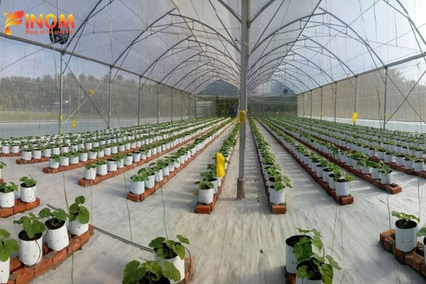 Greenhouse Project for Rock Melon in Tien Giang