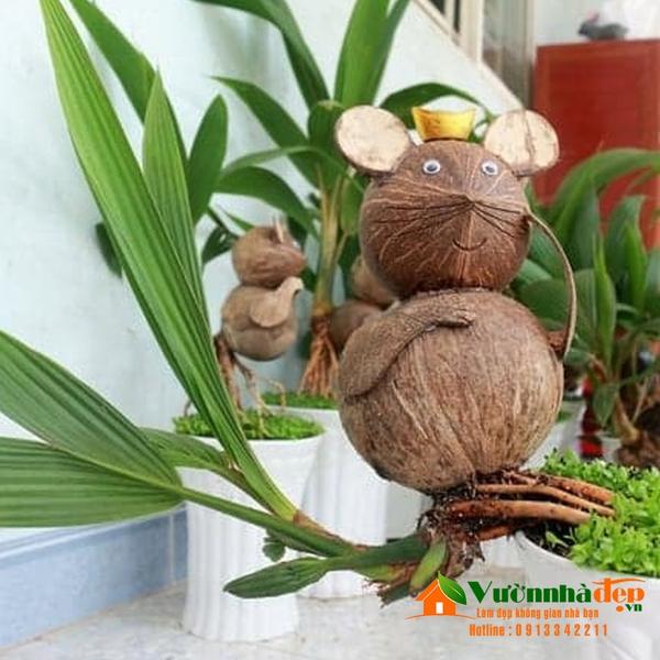 bonsai dừa đẹp