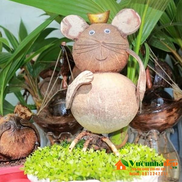 Cách làm bonsai cây dừa