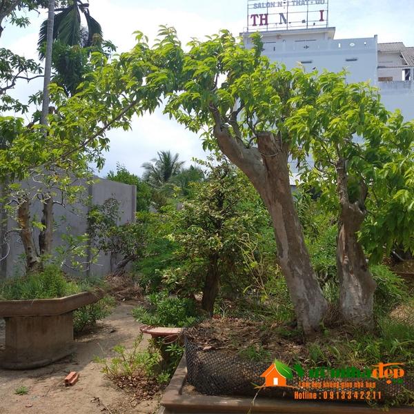 cây bonsai dang bay