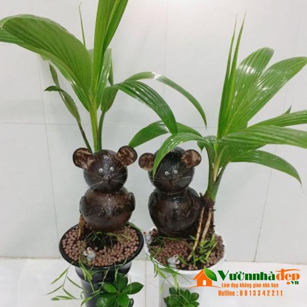 coconut-bonsai