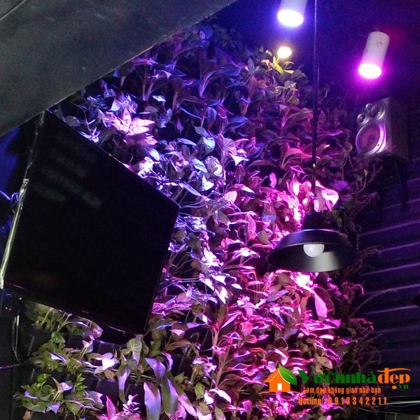 Đèn quang hợp tường cây