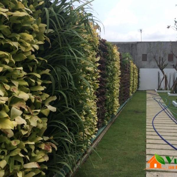 tường cây xanh nhà mẫu