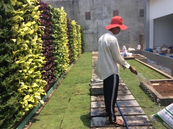 tường cây xanh chung cư