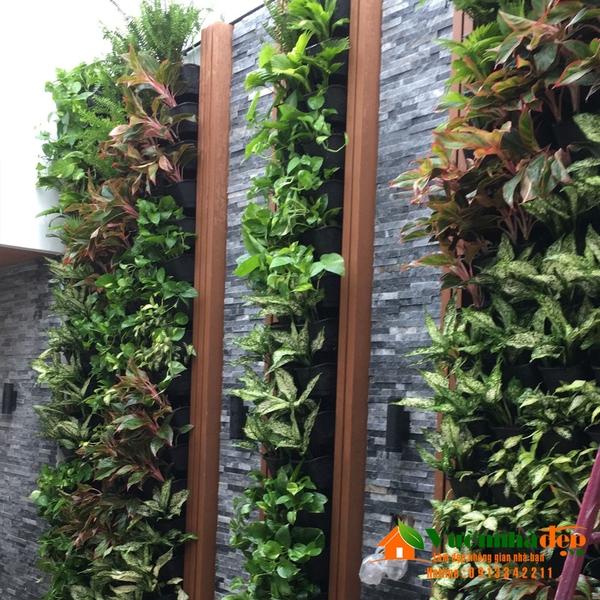 Tường cây trên sân thượng