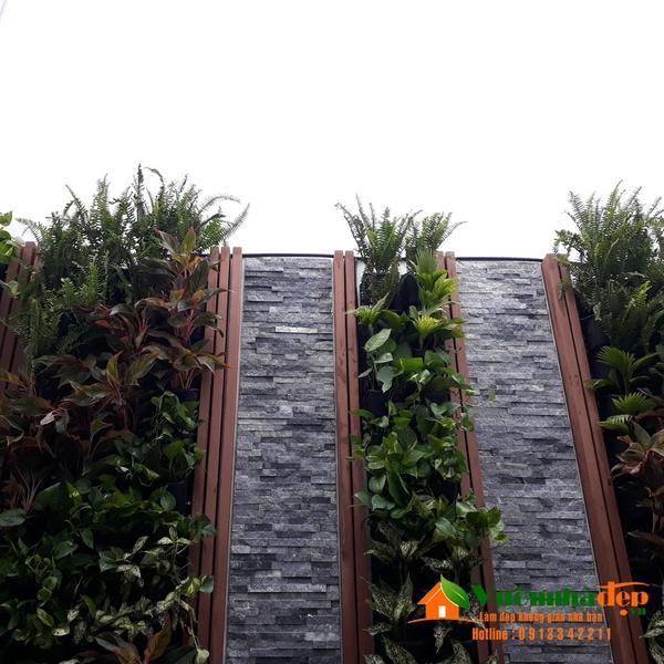 Thi công tường cây trên sân thượng