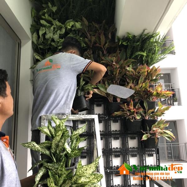 thi công tường cây chung cư