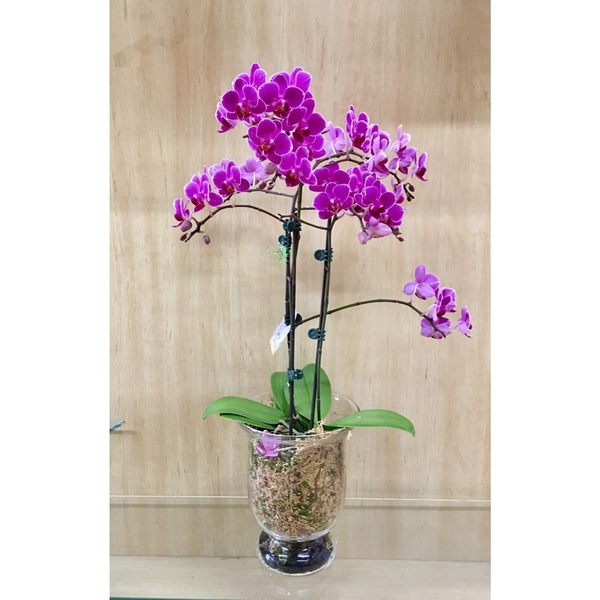 orchid-plant-285