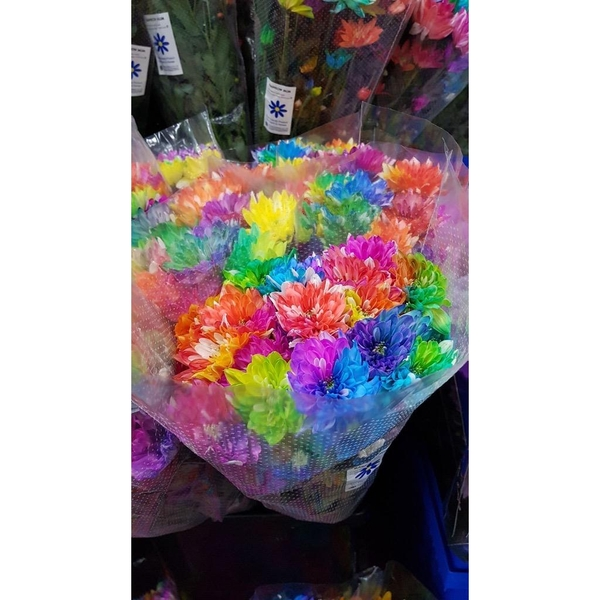 colourful-chrysanthemums
