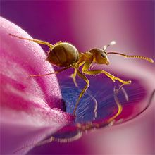 100 Most Beautiful Macro Photography examples for your inspiration