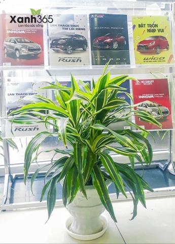 Mang màu xanh đến Showroom Toyota Hoàn Kiếm