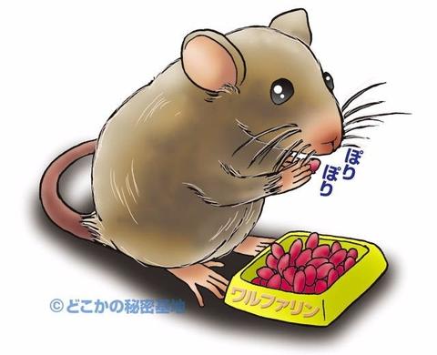 mua Thuốc viên diệt chuột Dethmor Nhật Bản