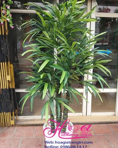 Cây xanh trang trí - Bộ sưu tập 150 loại cây xanh trang trí trồng trong nhà