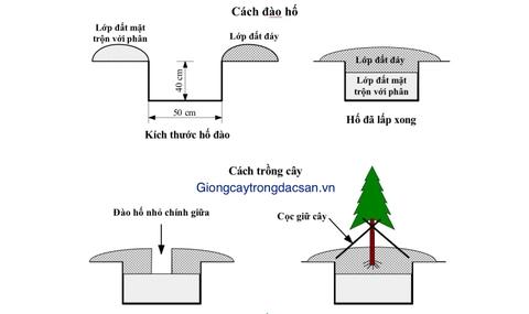 www.giongcaytrongdacsan.vn