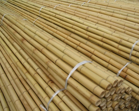 Need to buy bamboo poles to fence
