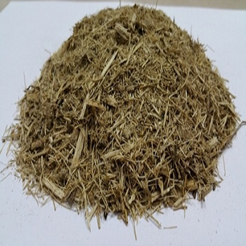 Dried SugarCane Bagasse