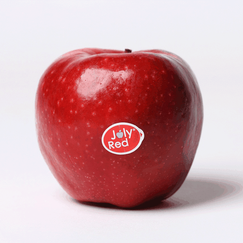 Dutch Joly Red Apple