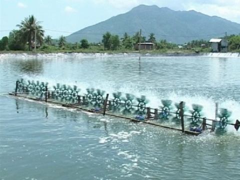 Limestone Using For Water Treatment In Aquaculture Sector