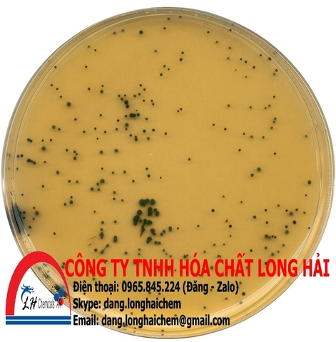 TSC (Tryptose Sulfite Cycloserine) agar (base) (Merck) | 111972
