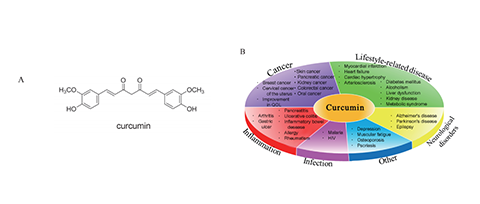 "Curcumin (Theracurmin) - [Clinical Application of ""Curcumin"", a Multi-Functional Substance]"