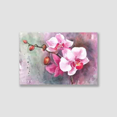 Tranh Orchid flowers watercolor S0229
