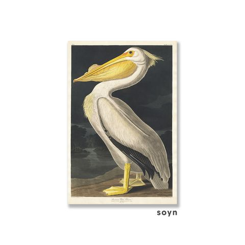 Tranh canvas The birds of America, Soyn SN0116