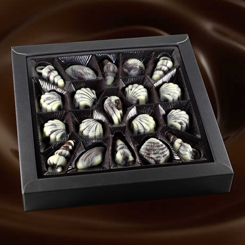 Amazing Seashell Chocolate (3 options)
