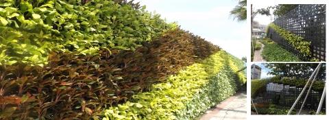 Khuyến mãi thi công tường cây xanh tháng 09.09.2019 - 1