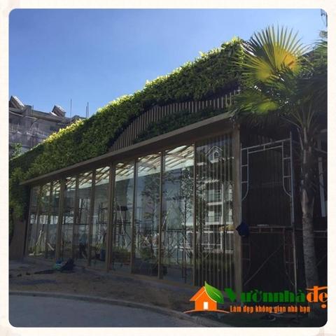 Thi công tường cây nhà mẫu Jamona Golden Silk