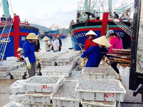 Ngư dân Nghệ An bội thu mùa biển