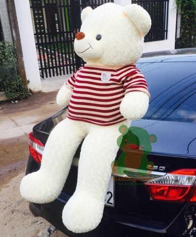 GB9 Gấu bông Teddy trắng