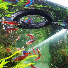 TOP AQUA FLOATING FEEDING RING